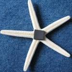 Nautical Decor Shell Magnets - Beac..