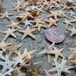 Beach Decor Tiny Starfish for Nauti..