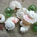 Seashell Decor - Beach Wedding or N..