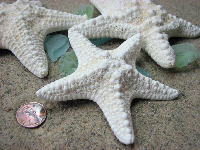 White Starfish Beach Decor Nautical Or Wedding Jungle 3 Pc 4 6 In