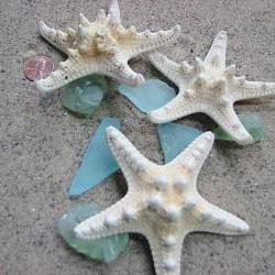 Starfish Beach Decor - Nautical Decor White Knobby Starfish for Beach Weddings - 3pc, 3-5in