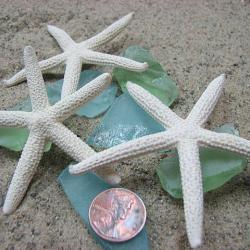 "White Starfish Beach Decor - Nautical Decor Starfish for Beach Weddings or Crafts, 1 dozen, 2-3"""